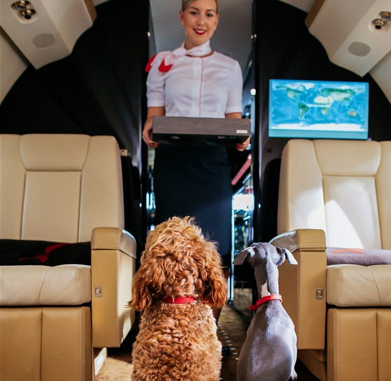 pets friendly chartered flights